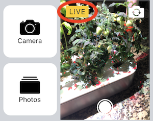 Notification of the Live Photo while taking a photo within the Messages app on iPhone.
